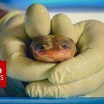 Meet the nuns saving a sacred species from extinction – BBC News